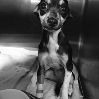 Photo taken at Animal Care Center by ValeRia M. on 1/24/2016