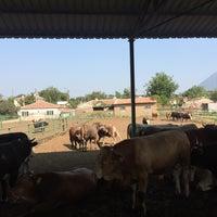 Photo taken at kralın çiftliği by TC Merter Y. on 8/11/2017