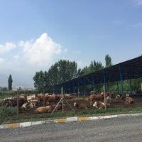 Photo taken at kralın çiftliği by TC Merter Y. on 6/21/2018