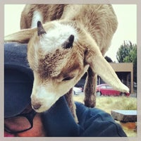 Photo taken at The Belmont Goats by b!X F. on 6/13/2013
