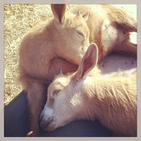 Photo taken at The Belmont Goats by b!X F. on 6/11/2013