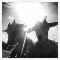 Photo taken at The Belmont Goats by b!X F. on 7/13/2013