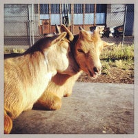 Photo taken at The Belmont Goats by b!X F. on 7/10/2013