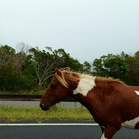 Photo taken at Assateague Island National Seashore (Maryland) by Terry B. on 8/18/2013