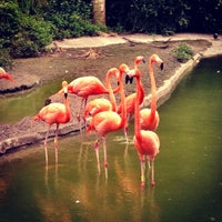 Photo taken at Zoo Miami by carolina on 7/5/2012