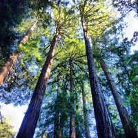 Photo taken at Muir Woods National Monument by Ben F. on 8/11/2013