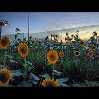 Das Foto wurde bei Sunflower Garden von Aaron H. am 10/28/2012 aufgenommen