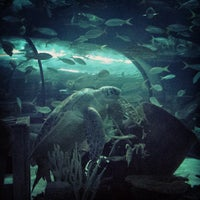 Photo taken at Ripley's Aquarium by Leigh Jay T. on 7/5/2013