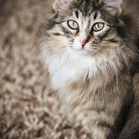 Photo taken at Calgary Pet Wellness & Spay/Neuter Clinic by Yext Y. on 8/18/2017