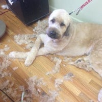 Photo taken at Hollywoof Grooming Salon, Inc. by Yext Y. on 8/5/2016