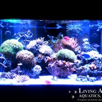 Awesome ... Photo Taken At Living Art Aquatics, Inc. By Yext Y. On 10/ ...