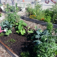 ... Photo Taken At Global Garden   Peterson Garden Project By Justina N. On  6/ ...