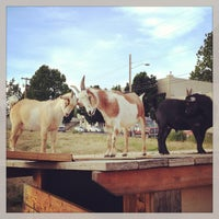 Photo taken at The Belmont Goats by Alissa on 6/16/2013
