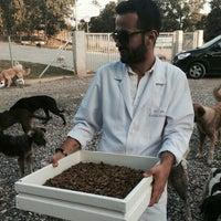Photo taken at Adapazarı Belediyesi Sahipsiz Hayvanlar Geçici Bakımevi by Zekeriya T. on 9/12/2014