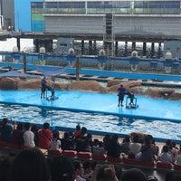 Photo taken at Acquatica - Sea Lion Show by Örangemylesy on 6/8/2017