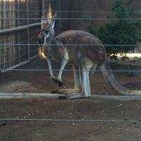 Photo taken at Kangaroo Exhibit by Anna A. on 2/5/2016