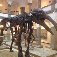 Photo taken at Paläontologisches Museum by Wolfgang S. on 11/20/2013