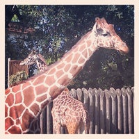 Photo taken at Sacramento Zoo by Sarah G. on 3/31/2013