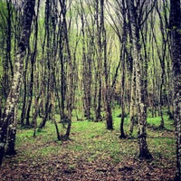 Photo taken at Belgrad Ormanı by Farana M. on 4/5/2013