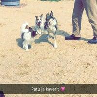 Photo taken at Kaarinan koirapuisto by Milla on 5/23/2016