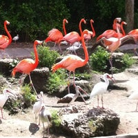 Photo taken at Zoo Miami by Robin R. on 3/18/2012