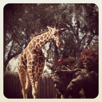 Photo taken at Sacramento Zoo by Margaret F. on 4/7/2012