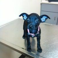 Photo taken at Acredale Animal Hospital & Grooming by Michelle S. on 8/15/2012