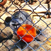 Photo taken at Orange County Zoo by Shelby B. on 10/25/2012
