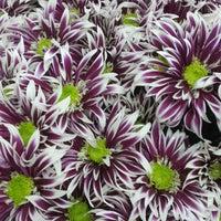 Photo taken at Sevda Flowers by Sevda Flowers on 9/6/2014