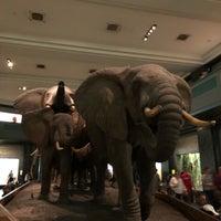 รูปภาพถ่ายที่ American Museum of Natural History Museum Shop โดย Jinwook K. เมื่อ 7/17/2018