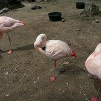 Photo taken at Roger Williams Park Zoo by Kapado F. on 4/19/2013