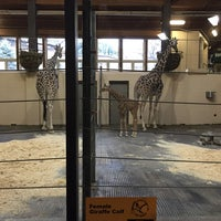 Photo taken at Giraffe Complex by Kathy K. on 11/26/2014