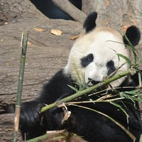 Photo taken at Ueno Zoo by T A. on 11/25/2012