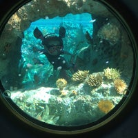 Photo taken at Finding Nemo Submarine Voyage by Lester R. on 10/27/2012