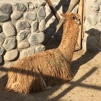 Photo taken at Zoológico de camélidos sudamericanos by Jess P. on 7/20/2016