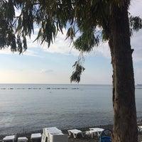 Снимок сделан в Venus Beach пользователем Olga L. 9/29/2017