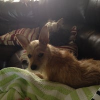 Photo taken at Pampered Pet Services by Dana W. on 4/9/2014