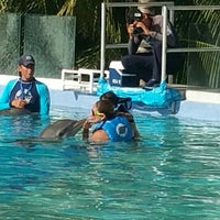 Photo taken at Dolphin Maroma By Dolphin Discovery by Stephannie S. on 1/9/2016
