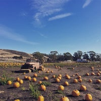Photo taken at Bob's Pumpkin Patch by mikey r. on 10/20/2016