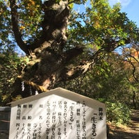 Photo taken at 温泉神社御神木 by けんけん み. on 10/21/2016