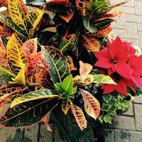 ... Photo Taken At Driftwood Garden Center U0026amp;amp; Florist By Tanya G. On  ...