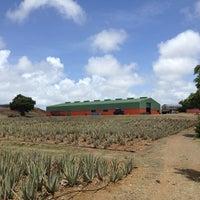 Foto tomada en Aloe Vera Plantation. por KitKat el 5/27/2013