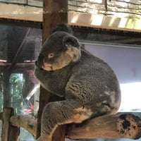 Photo taken at Koala Zone by David M. on 9/27/2018