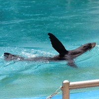 Photo taken at Underwater World And Dolphin Lagoon by Colleen Z. on 2/15/2013