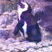 Foto tomada en Inside Penguin Crawl Tube por Charlie V. el 11/20/2012