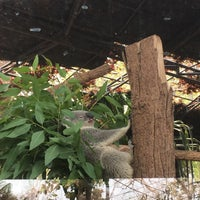 Photo taken at Koala Zone by Charin_dia on 3/14/2016