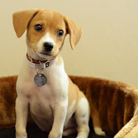 Photo taken at North Shore Animal League America by North Shore Animal League America on 9/2/2014