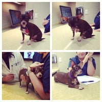Photo taken at Chelsea Animal Hospital by Carter M. on 8/8/2013