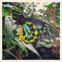 Magic Wings Butterfly Conservatory
