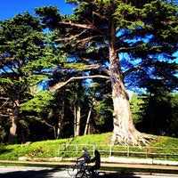 Photo prise au Golden Gate Park par Darius M. le12/30/2012